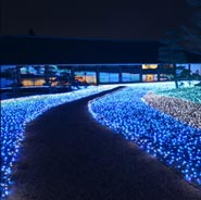 Flower Tanzaku to Winter Tanabata Road 冬七夕ロード願いの花たんざく